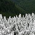 Mt. Pilchuck - 8