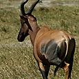 Day 17 - Oldupai Gorge to Serengeti - 24