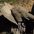 Day 20 - Serengeti & Fly to Nairobi - 12