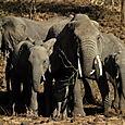 Day 20 - Serengeti & Fly to Nairobi - 20