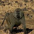 Day 20 - Serengeti & Fly to Nairobi - 23