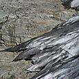 Glacier Crest Trail - 15