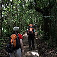 Day 7 - Kili - To Machame - 7