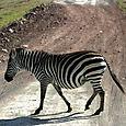 Day 15 - To Ngorongoro Crater - 12