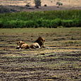 Day 16 - Ngorongoro Crater - 55
