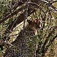 Day 17 - Oldupai Gorge to Serengeti - 15