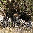 Day 17 - Oldupai Gorge to Serengeti - 13