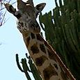 Day 17 - Oldupai Gorge to Serengeti - 42
