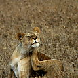 Day 19 - Serengeti - 54