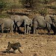 Day 20 - Serengeti & Fly to Nairobi - 21