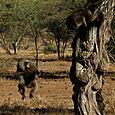 Day 20 - Serengeti & Fly to Nairobi - 29