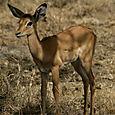 Day 20 - Serengeti & Fly to Nairobi - 37
