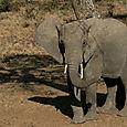 Day 20 - Serengeti & Fly to Nairobi - 15