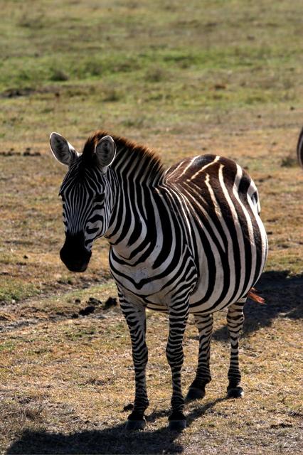 Day 15 - To Ngorongoro Crater - 11