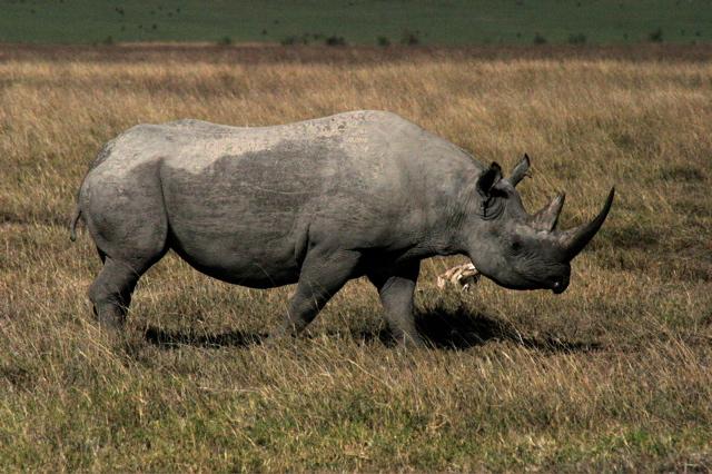 Day 15 - To Ngorongoro Crater - 2