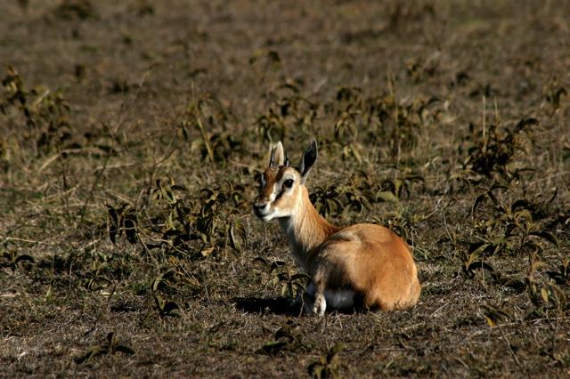 Day 15 - To Ngorongoro Crater - 8