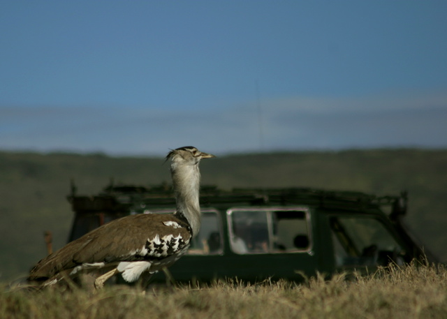 Day 16 - Ngorongoro Crater - 10