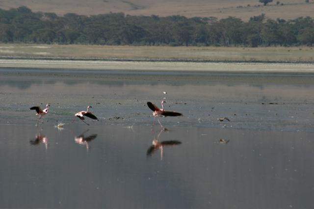 Day 16 - Ngorongoro Crater - 17