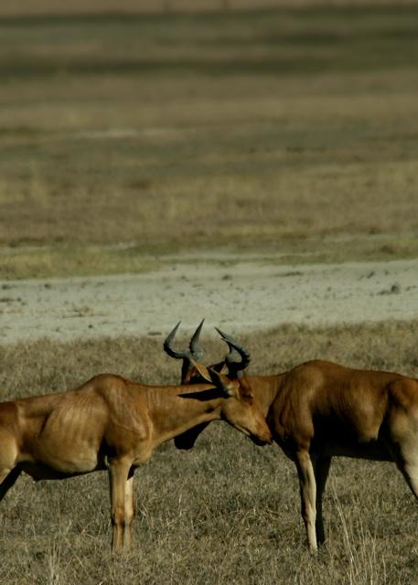 Day 16 - Ngorongoro Crater - 3