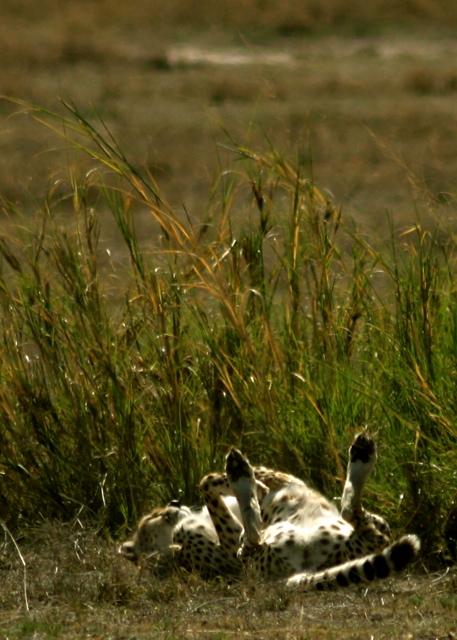 Day 16 - Ngorongoro Crater - 30