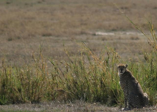 Day 16 - Ngorongoro Crater - 32