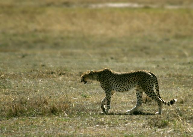Day 16 - Ngorongoro Crater - 33