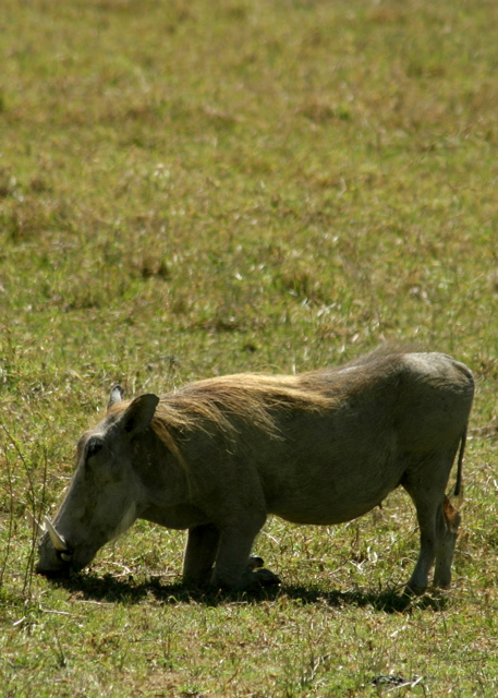 Day 16 - Ngorongoro Crater - 34