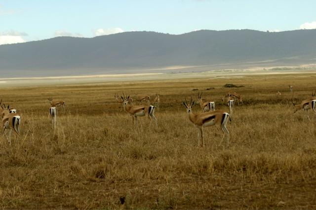 Day 16 - Ngorongoro Crater - 74