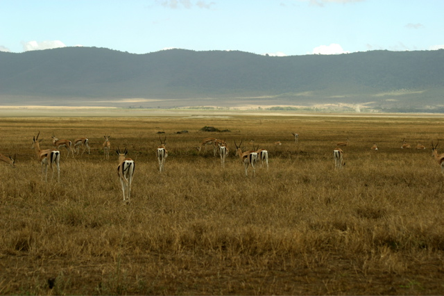 Day 16 - Ngorongoro Crater - 75