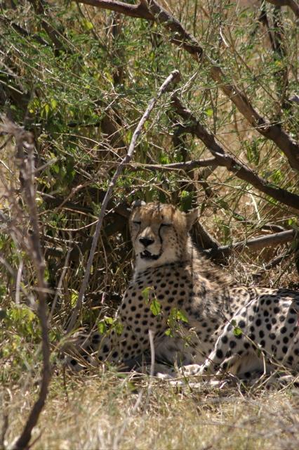 Day 17 - Oldupai Gorge to Serengeti - 17