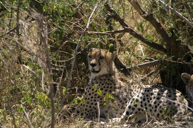 Day 17 - Oldupai Gorge to Serengeti - 18