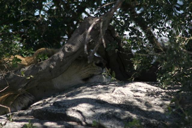Day 17 - Oldupai Gorge to Serengeti - 23