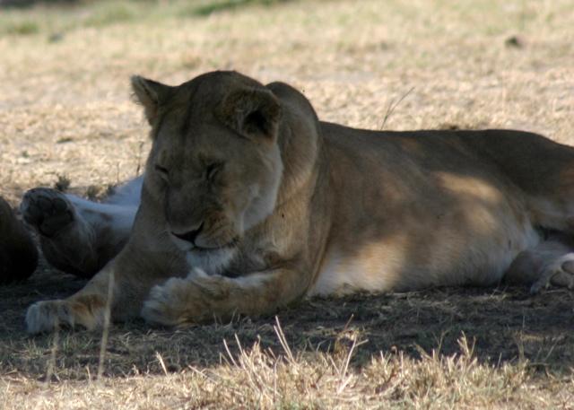 Day 17 - Oldupai Gorge to Serengeti - 36