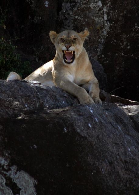 Day 18 - Serengeti - 15