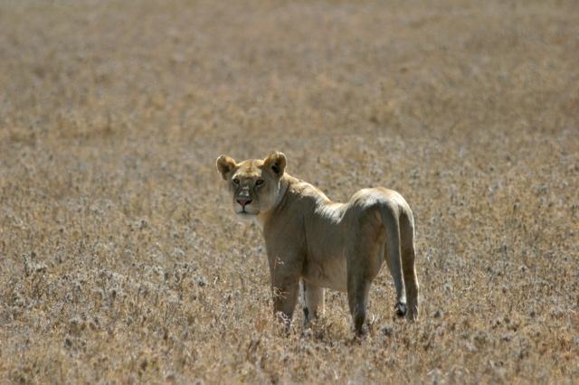 Day 18 - Serengeti - 19