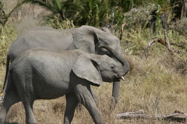 Day 18 - Serengeti - 23