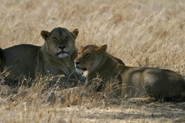 Day 18 - Serengeti - 25