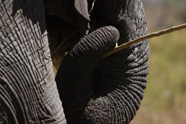 Day 18 - Serengeti - 28