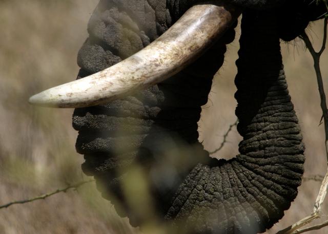 Day 18 - Serengeti - 38