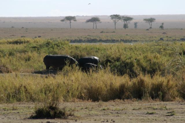 Day 18 - Serengeti - 4