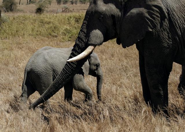 Day 18 - Serengeti - 42