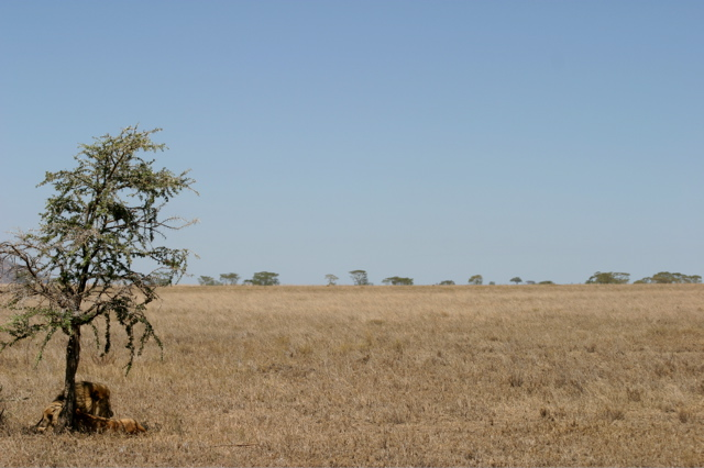 Day 18 - Serengeti - 46