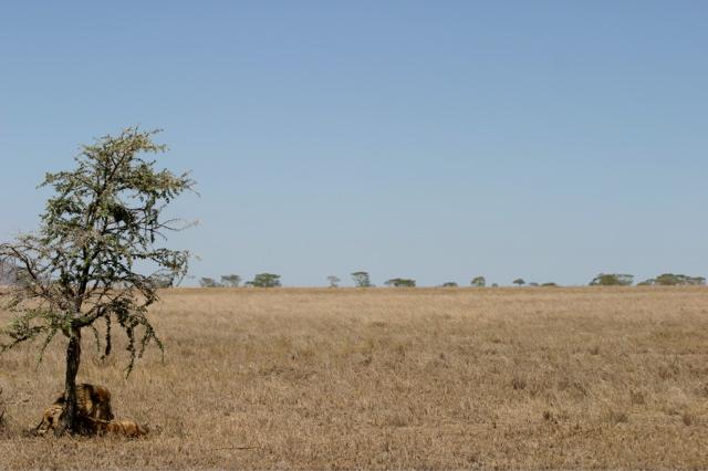 Day 18 - Serengeti - 46