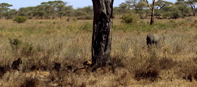 Day 18 - Serengeti - 55