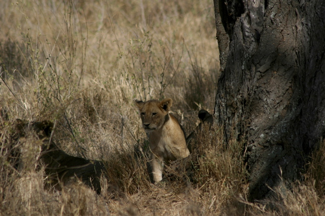 Day 18 - Serengeti - 57