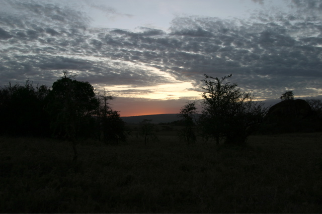 Day 18 - Serengeti - 59