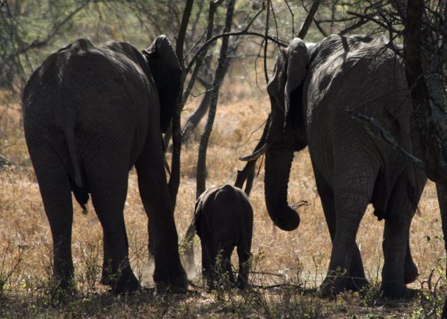 Day 18 - Serengeti - 9