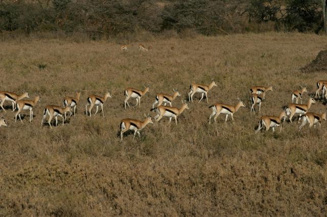 Day 19 - Serengeti - 1