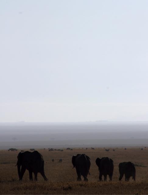 Day 19 - Serengeti - 10