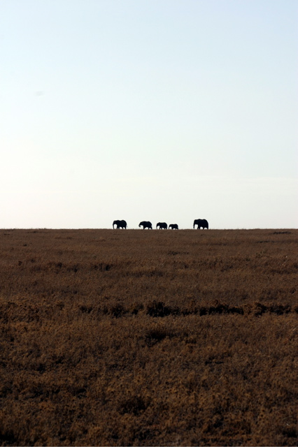 Day 19 - Serengeti - 13